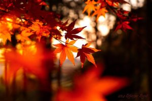 leaves, Fall, Depth of field
