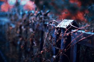 photography, Depth of field, Fence, Twigs