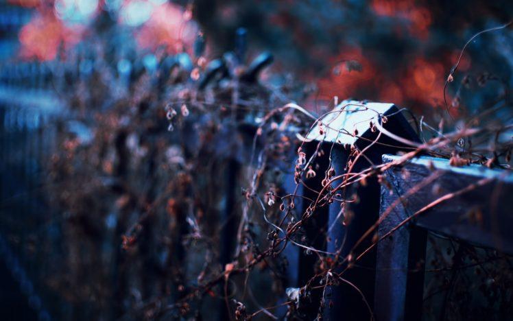 photography, Depth of field, Fence, Twigs HD Wallpaper Desktop Background