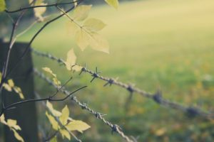 fence, Depth of field, Leaves, Barbed wire, Trees, Branch
