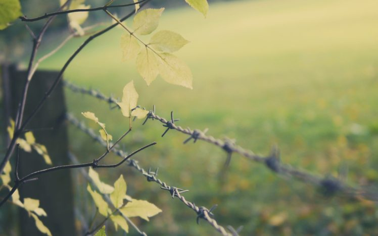 fence, Depth of field, Leaves, Barbed wire, Trees, Branch HD ...