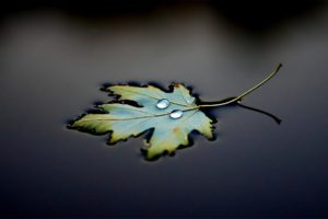 photography, Water, Leaves, Water drops