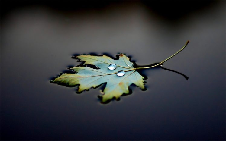 Photography Water Leaves Water Drops Hd Wallpapers Desktop And