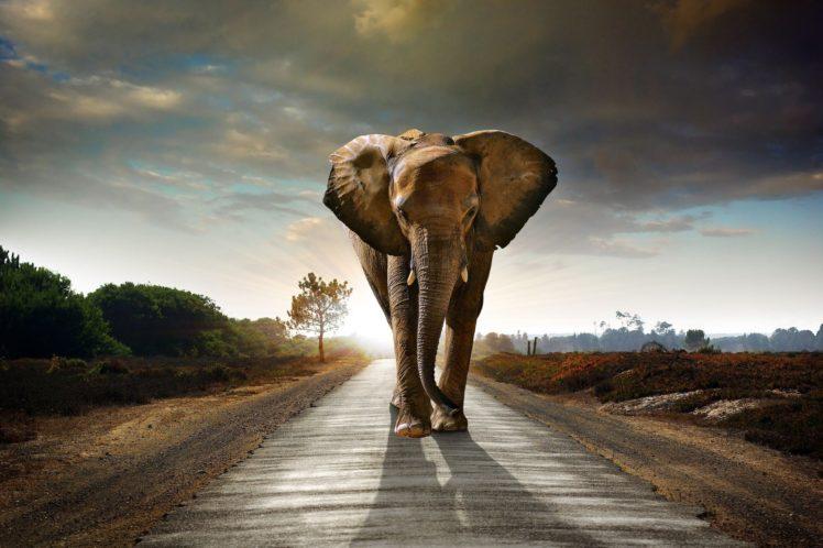 elephants HD Wallpaper Desktop Background