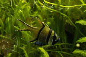 fish, Aquarium, Fishbowls