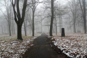 snow, Trees, Path