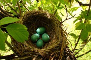 nests, Eggs