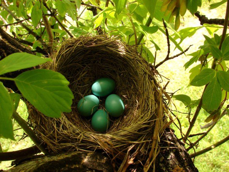 nests, Eggs HD Wallpaper Desktop Background