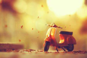 leaves, Fall, Toys, Tilt shift