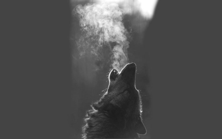 Wolf Hd Wallpapers Desktop And Mobile Images Photos