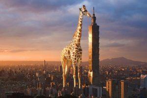 giraffes, Building