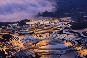 terraced field, Rice paddy