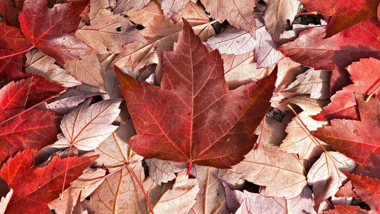 Canada Hd Wallpapers Desktop And Mobile Images Photos