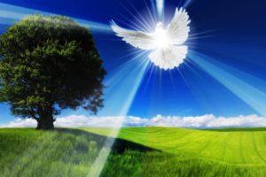 Spirit, Doves, Field