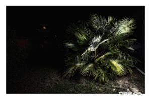 Bordeaux, Night, Palm trees