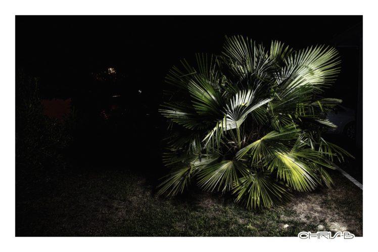 Bordeaux, Night, Palm trees HD Wallpaper Desktop Background