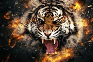 roar, Orange