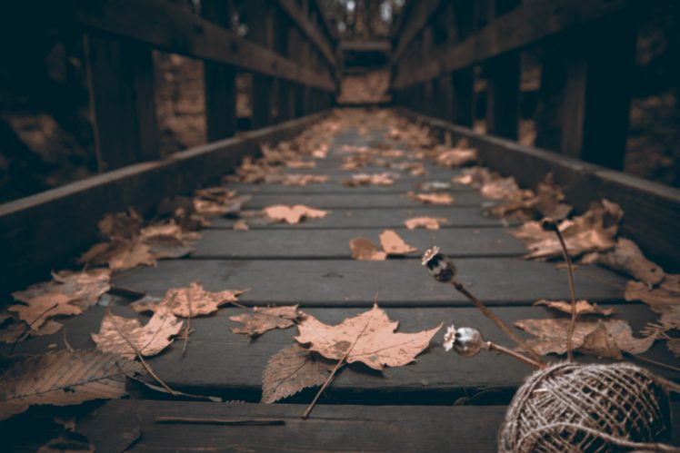 muted, Fall, Leaves, Bridge, Wood, Depth of field, Macro HD Wallpaper Desktop Background