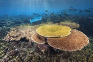 National Geographic, Coral, Fish, Underwater