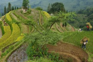 National Geographic, Terraces, Farm, Peasants, Rice paddy, China