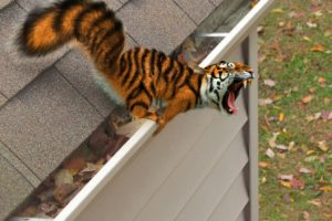 Bengal tigers, Photo manipulation