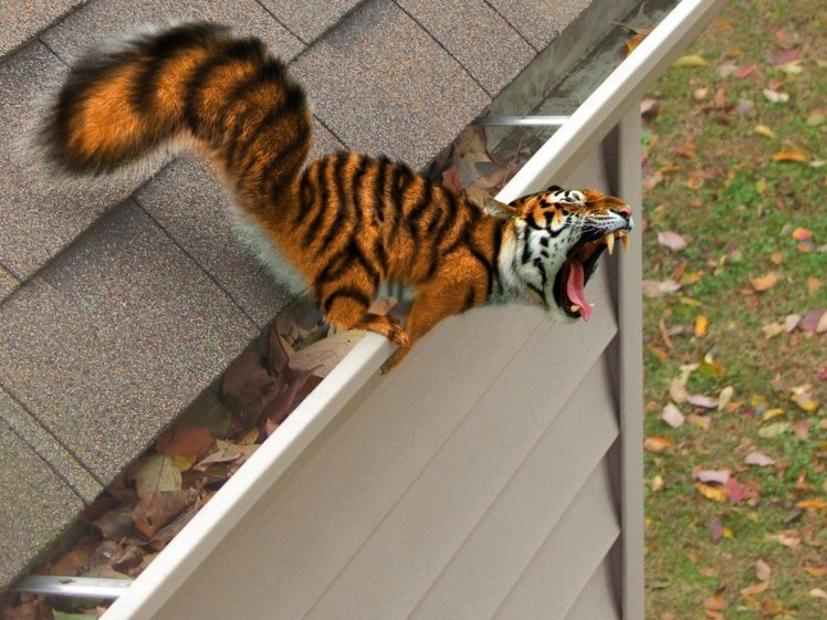 Bengal tigers, Photo manipulation HD Wallpaper Desktop Background