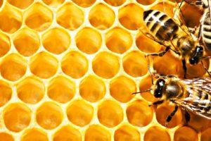 honeycombs, Bees, Macro
