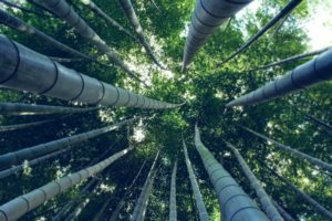 bamboo, Trees, Worms eye view