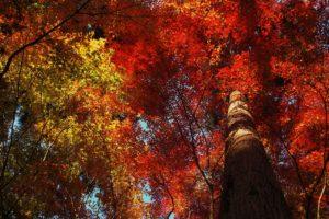 trees, Fall