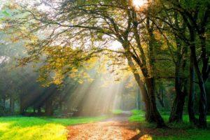 trees, Path, Sun rays, Dirt road