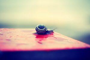 snail, Macro, Water drops