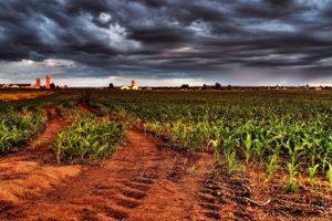 field, Corn