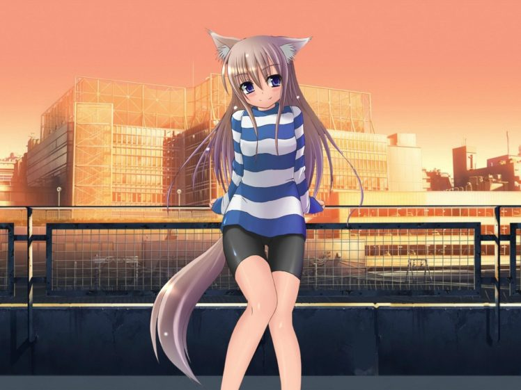 long hair, Purple eyes, Anime, Anime girls, Cat ears, Smiling, Tail HD Wallpaper Desktop Background