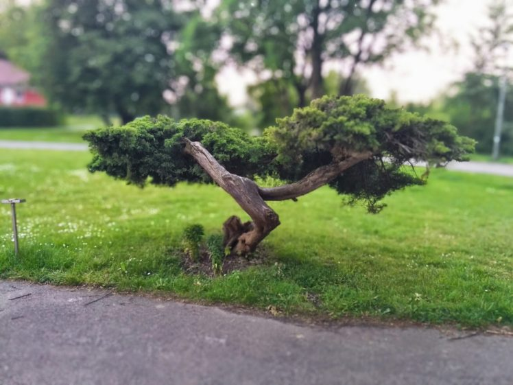 Trees Bonsai Hd Wallpapers Desktop And Mobile Images Photos