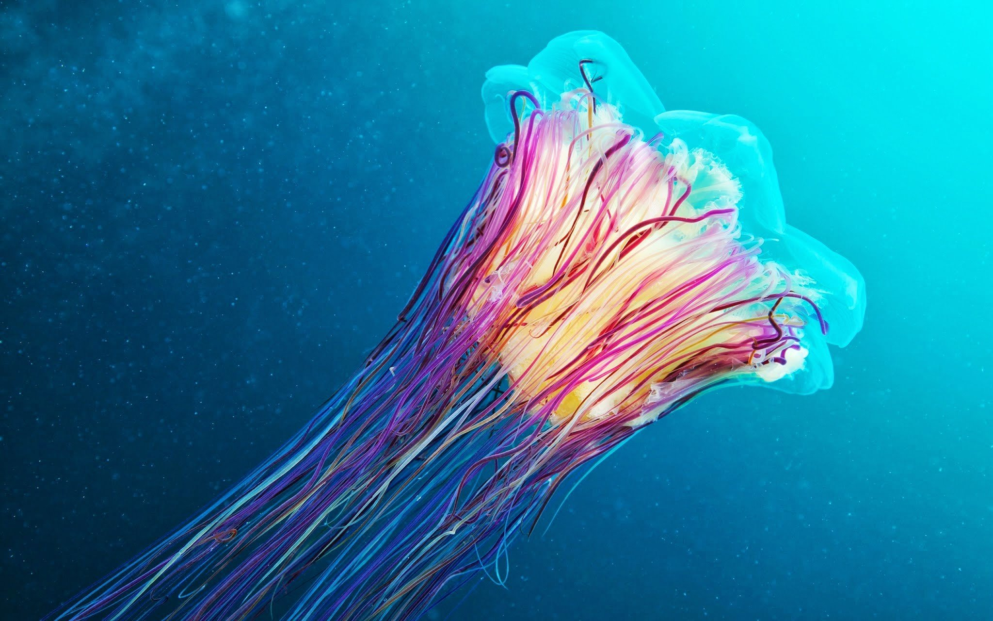 Underwater medusa jellyfish hd wallpapers desktop and - Jellyfish hd images ...
