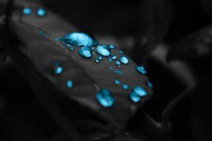 closeup, Selective coloring, Leaves, Water drops, Macro