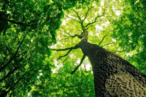 green, Trees, Branch, Leaves, Wood, Worms eye view