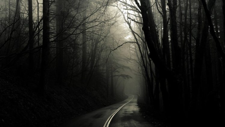 road, Dark, Trees HD Wallpaper Desktop Background