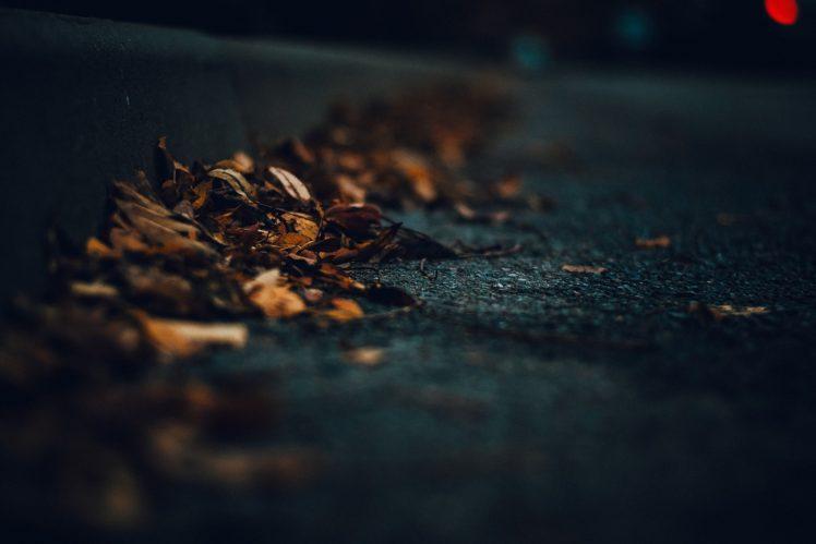 macro, Road, Leaves, Dark HD Wallpaper Desktop Background
