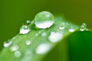 depth of field, Macro, Water drops