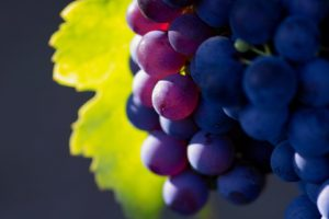 depth of field, Grapes