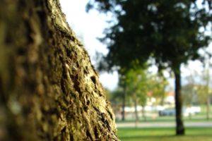 depth of field, Trees, Bark