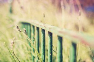 depth of field, Fence