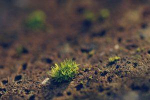 depth of field, Macro