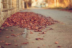 depth of field, Leaves, Street