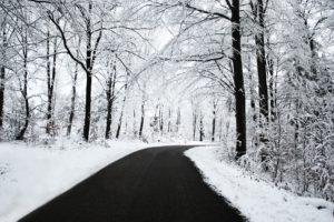 road, Snow, Trees