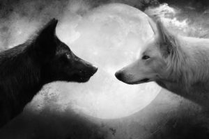 wolf, Black, White, Moon