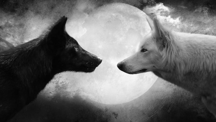 Wolf Black White Moon Hd Wallpapers Desktop And Mobile Images Photos