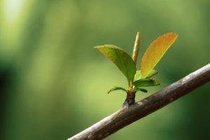 leaves, Branch