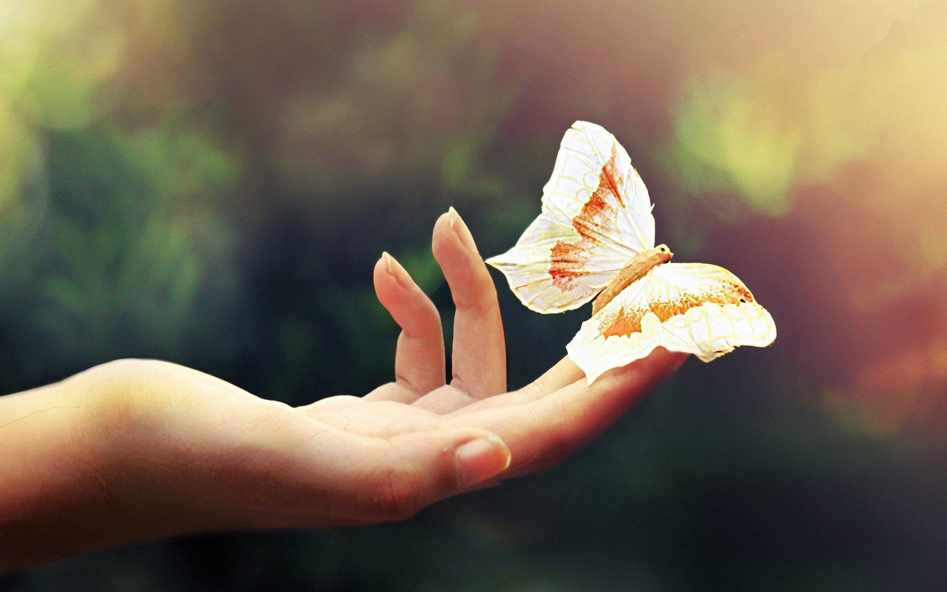 closeup, Butterfly, Hand Wallpaper